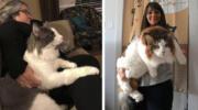 18 котів із завидною шириною морди і підвищеною пухнастістю всім на заздрість