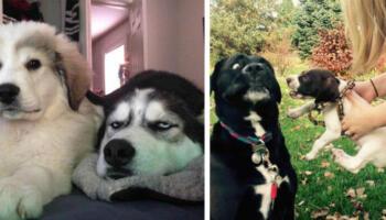 20 кумедних реакцій старших собак на появу в будинку нового цуценяти