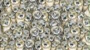Лише найуважніші зможуть відшукати на цій картинці кота. А ви відноситесь до них?